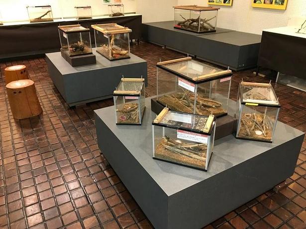 飼育展示では生きている昆虫たちを間近で見られる