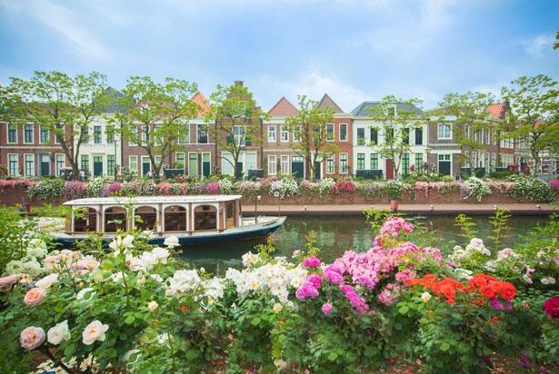 「バラ祭」開催中の様子。ヨーロッパを思わせる街並みにバラが咲き、異国情緒たっぷり