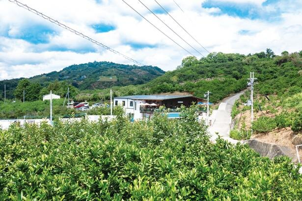 京都、神戸などにも店舗はあるが、のどかな果樹園の中で豊かな自然を体感できるのは本店ならでは/藤桃庵