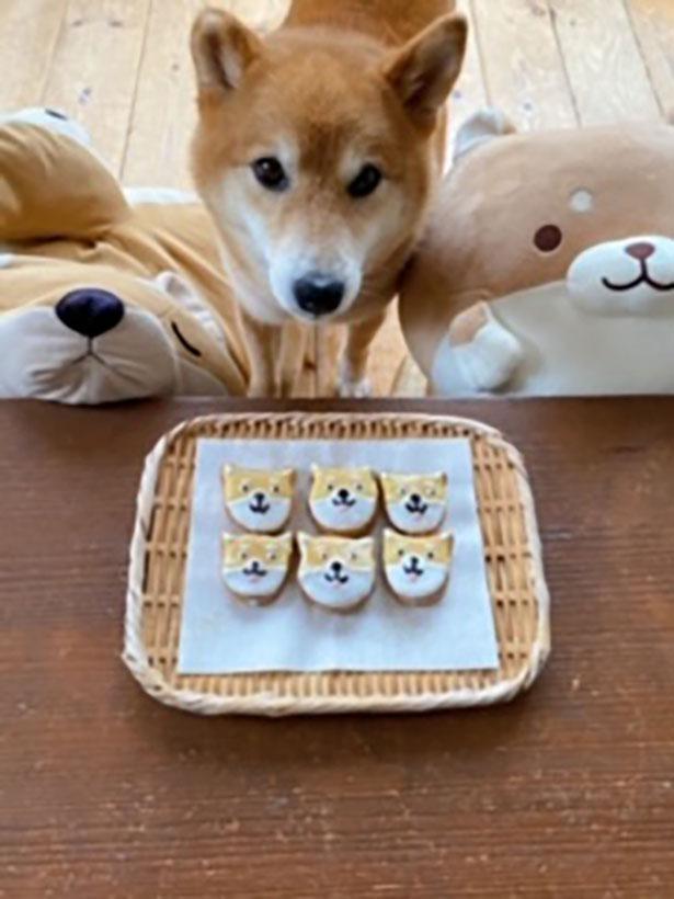 柴犬クッキーがおいしそう!
