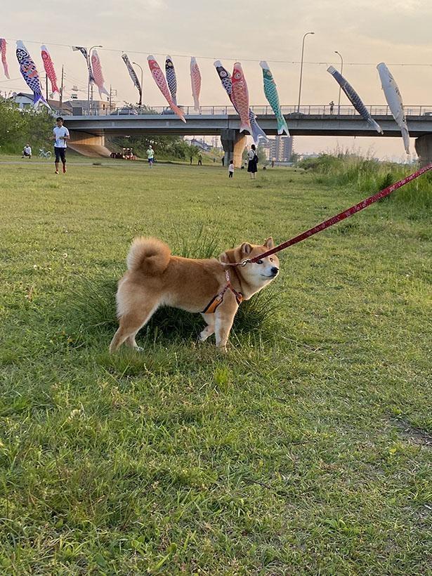 芝生でお散歩