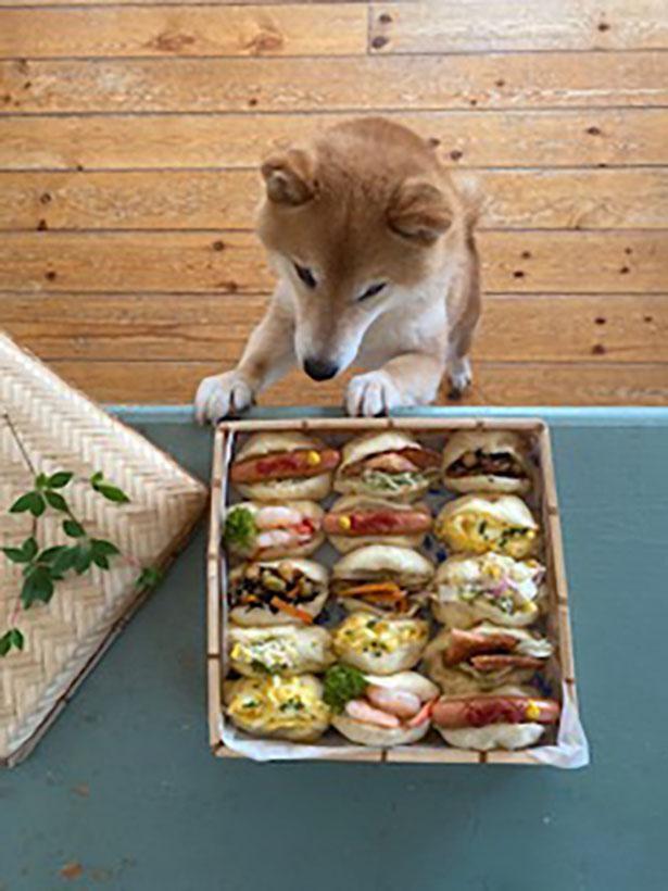カラフルなサンドイッチが気になる!