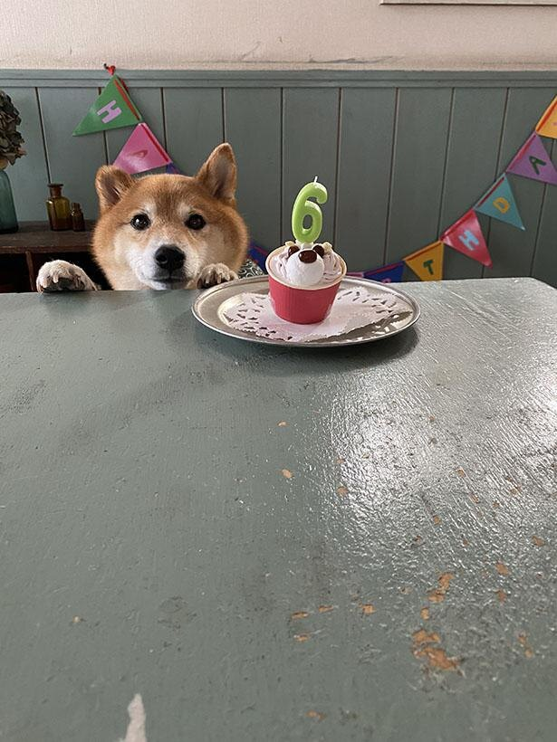 お誕生日のゆずちゃん