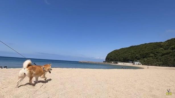 淡路島東海岸の南部にある、白砂青松の風光明媚な大浜海水浴場。砂浜はザクザクと柔らかく歩き心地も最高!