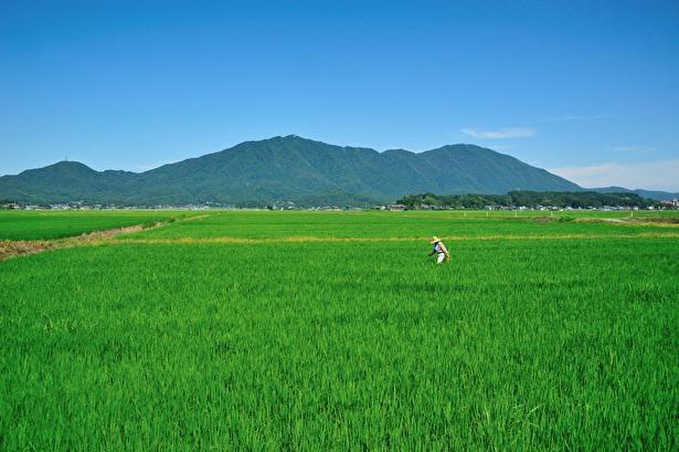 彌彦神社は弥彦山の麓に鎮座している
