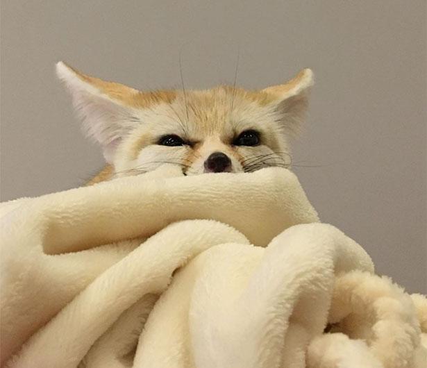 毛布に沈むてつおくんがかわいすぎる!