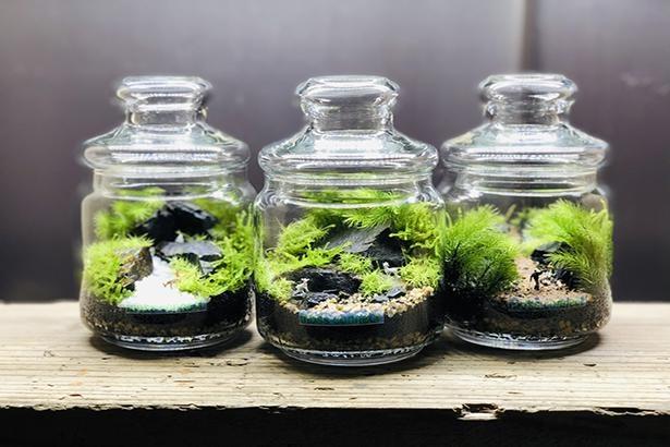 教室の初級編(3000円)で作る苔テラリウムのイメージ。準備された3種の苔と器を使う