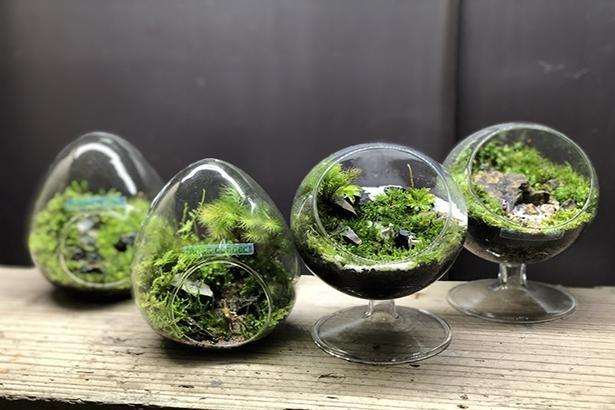 教室の中級編(4500円~)で作る苔テラリウムのイメージ。中級編では好きな容器や苔を選べる