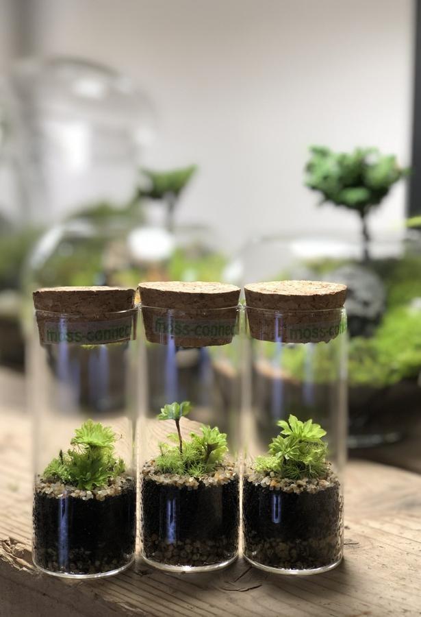 ガラスの容器に1種類の苔を植えたシンプルな苔テラリウム