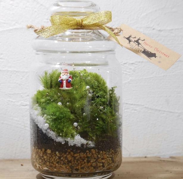 クリスマスバージョンの苔テラリウム。苔の種類やアレンジの仕方によって洋風仕上げられるのも魅力の一つ