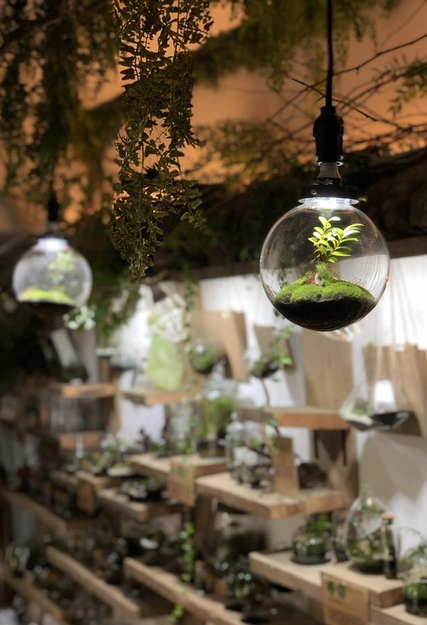 天井照明が一体化した容器を使った作品。優しい緑色が浮かび、カフェのような癒しの空間に