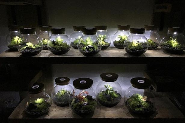 ライト内蔵の容器を使えば、神秘的な雰囲気を漂わせる照明器具に