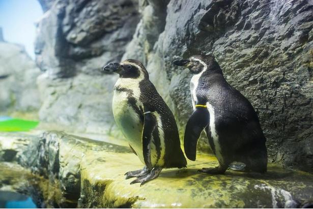 立っているだけでもかわいいペンギンたち