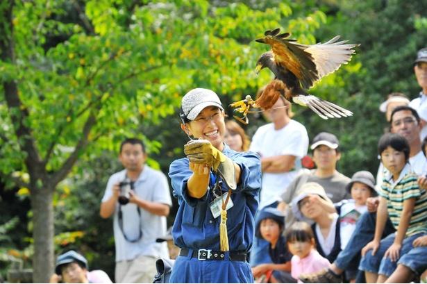 【写真】悠然と大空を羽ばたくタカを間近で見られる「バードショー」(毎日13時30分~、予告なく中止、変更になる場合あり)
