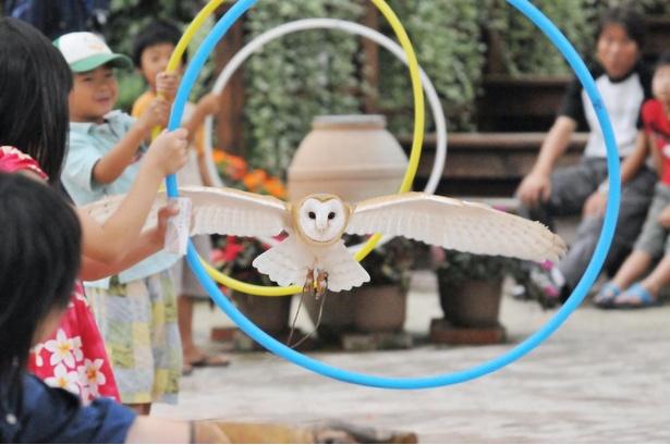 観客の頭上スレスレを飛び抜ける大迫力の「フクロウの飛行ショー」(毎日11時~、15時~。予告なく中止、変更になる場合あり)