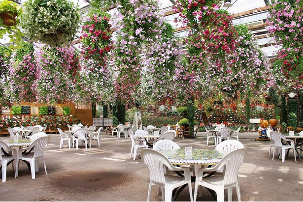 満開の花の下のレストランで、お茶や食事を楽しもう