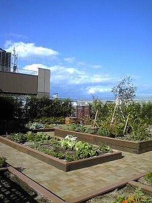屋上菜園だからこその絶景も魅力のひとつかも!