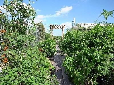 「クルム浜田山」の屋上菜園。自分の家の屋上だからすぐに手入れできていい