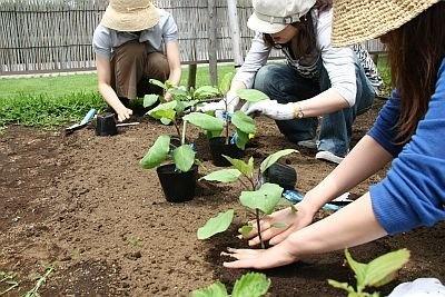 六本木ヒルズ屋上庭園の畑に苗を植えるトラヤカフェのスタッフ