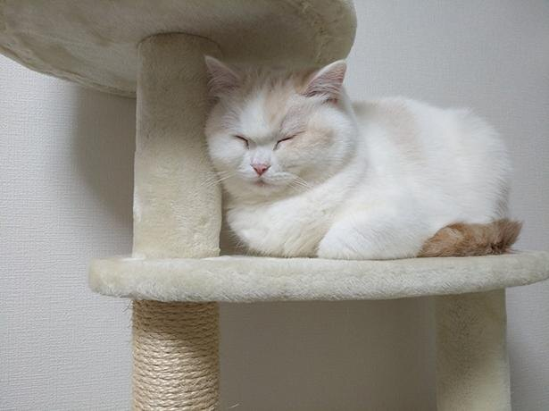 眠すぎてキャットタワーに寄り掛かる