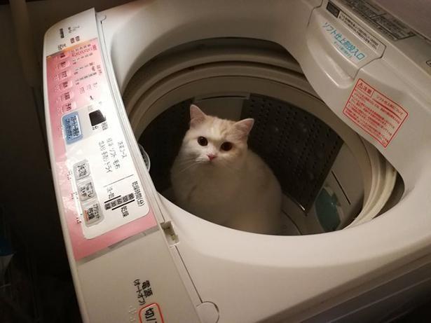 洗濯機の中でかくれんぼ