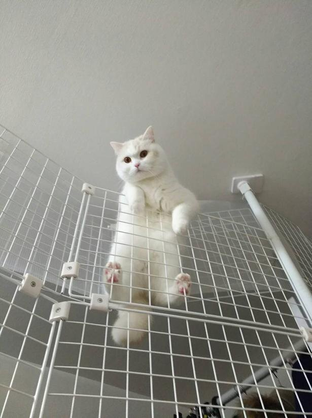 気分はアクションスター!?フワフワの手足で器用にフェンスを登る福ちゃん