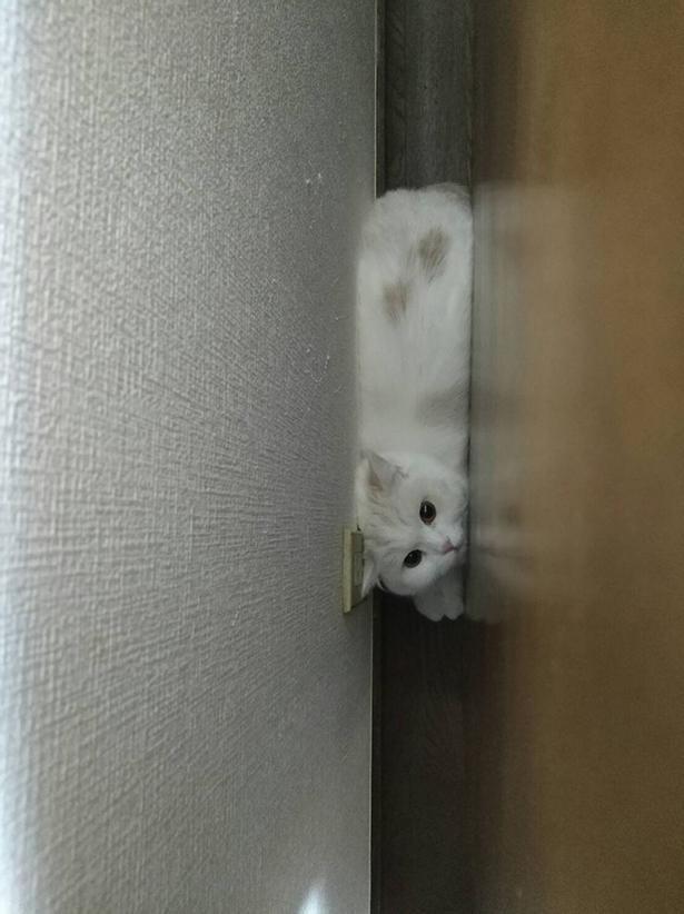 ベッドと壁の隙間からこんにちは