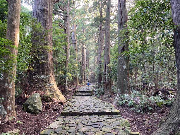 凜とした空気に包まれる大門坂。聖地である「那智山」へと全長約600m、高低差約100mの石畳が続く/熊野古道 大門坂