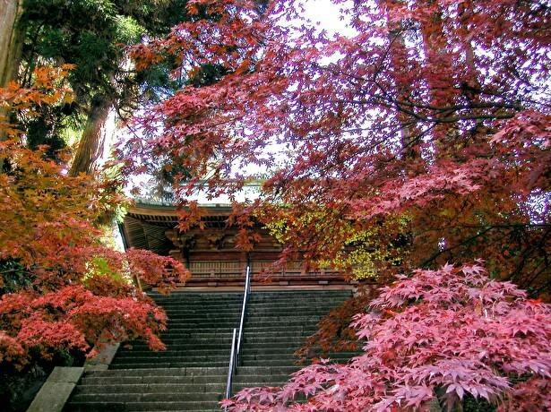 モミジに覆われた紅葉の文殊楼(東塔)は見事