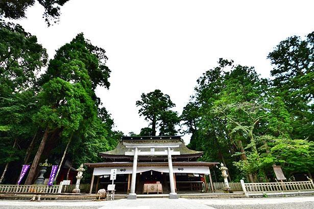 鳥居の奥に見えるのが拝殿、さらに幣殿、石の間と続き、一番奥に本殿と4棟からなる社殿