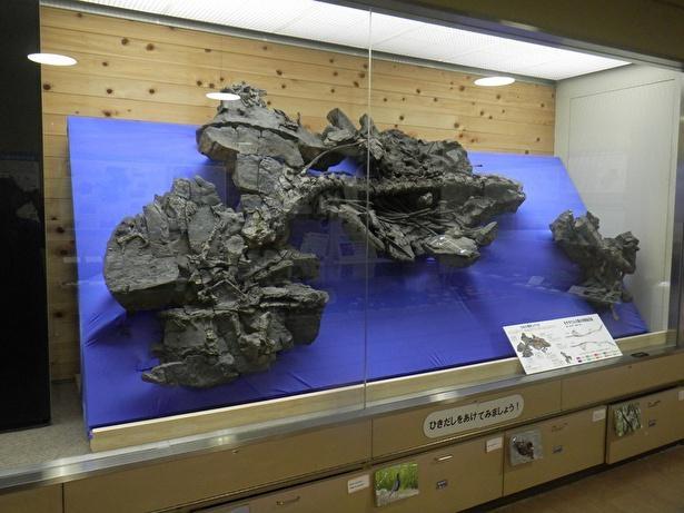 モササウルスの産状レプリカは約3メートル×1.4メートルの大きさ