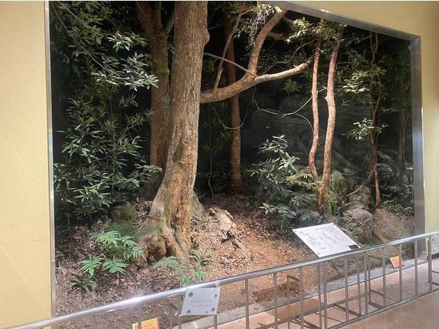 天然記念物の那智原始林をジオラマで再現