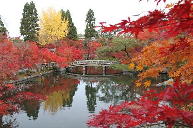 橋を彩る深紅の紅葉 / 6位:永観堂 禅林寺(京都府)