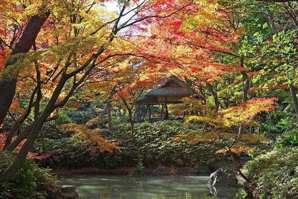 光に照らされ赤色と黄色に輝くカエデ / 5位:六義園(東京都)