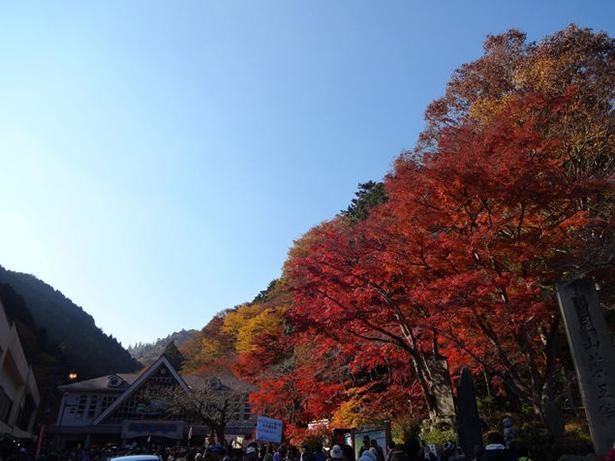 山頂から谷いっぱいに広がる鮮やかなモミジが格別 / 9位:高尾山(東京都)