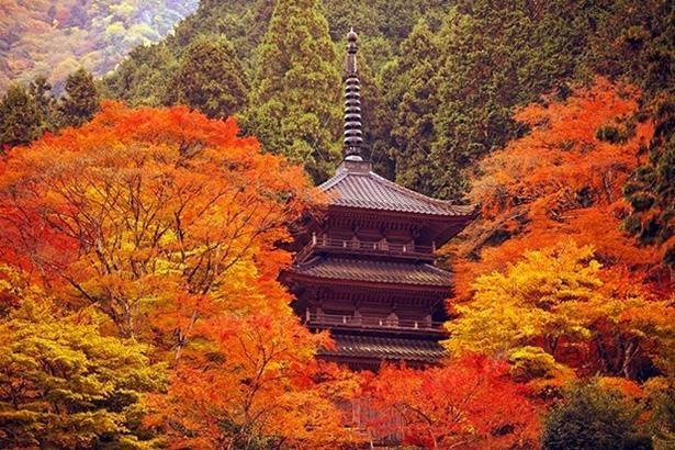 多宝塔の周囲を鮮やかに彩る紅葉 / 4位:高源寺(兵庫県)