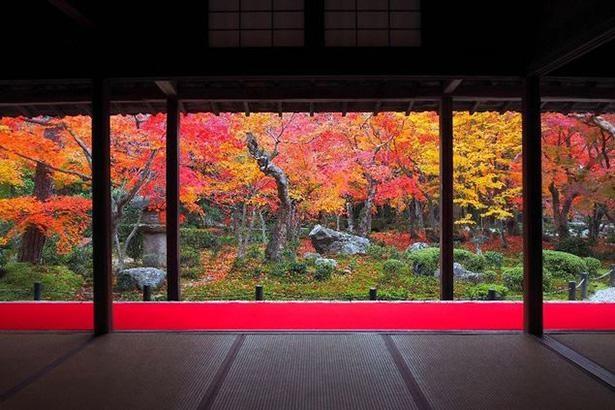 本堂前に広がる庭園「十牛之庭」から見渡す風景は一枚の絵画のよう / 7位:圓光寺(京都府)