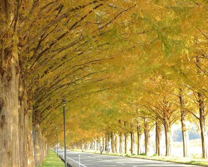 全国の紅葉名所ランキングTOP10!日本屈指の美しい紅葉が望める人気スポットを紹介