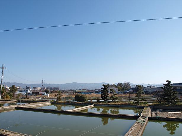 周辺には金魚の養殖池が多く、のどかな雰囲気