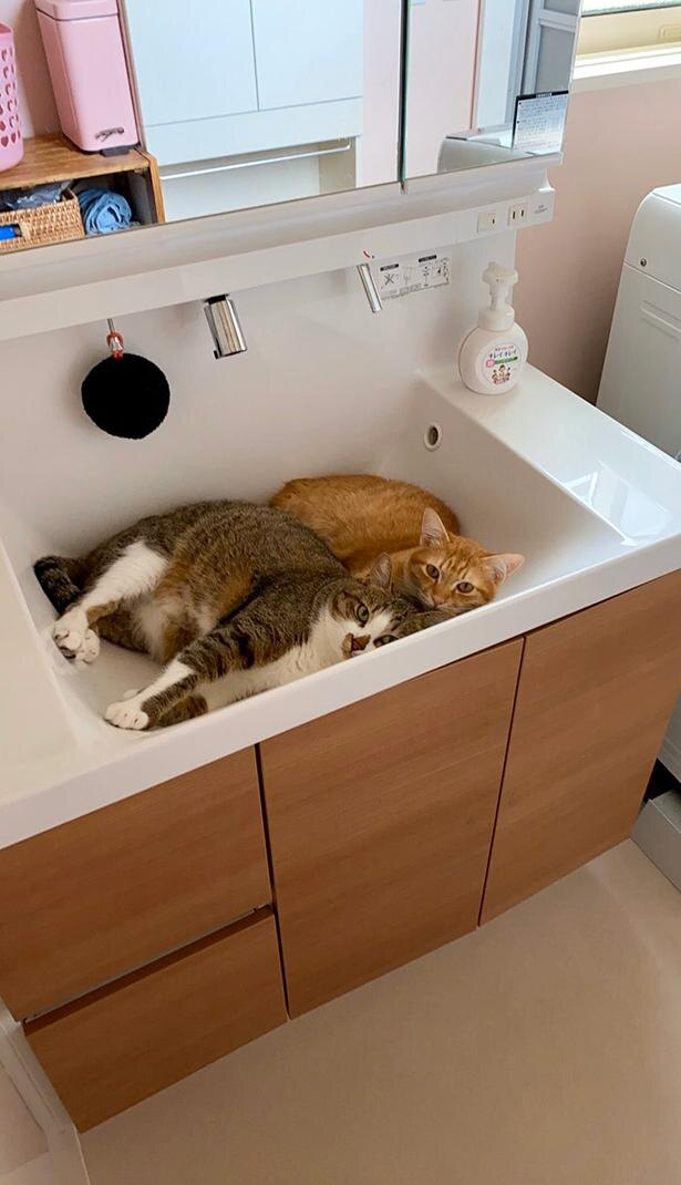 猫たちのサマーベッド?