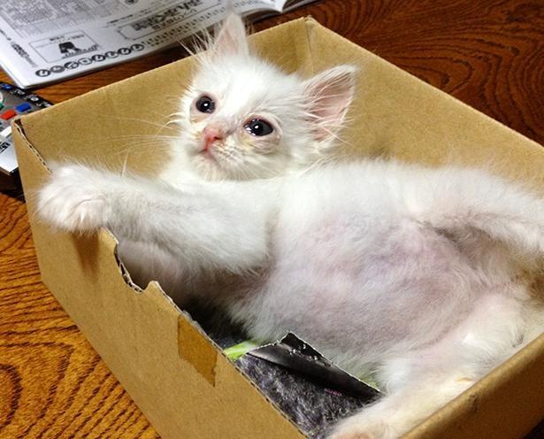 ふくてんさんに猫と暮らす楽しさを教えてくれた、ネムちゃんの保護当時