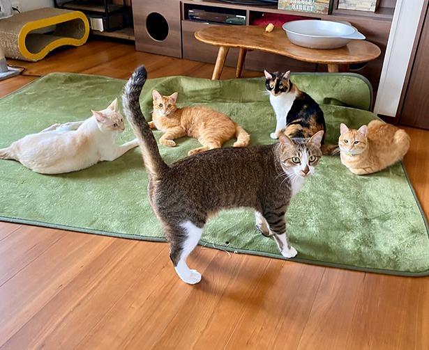 まさしく猫のための家