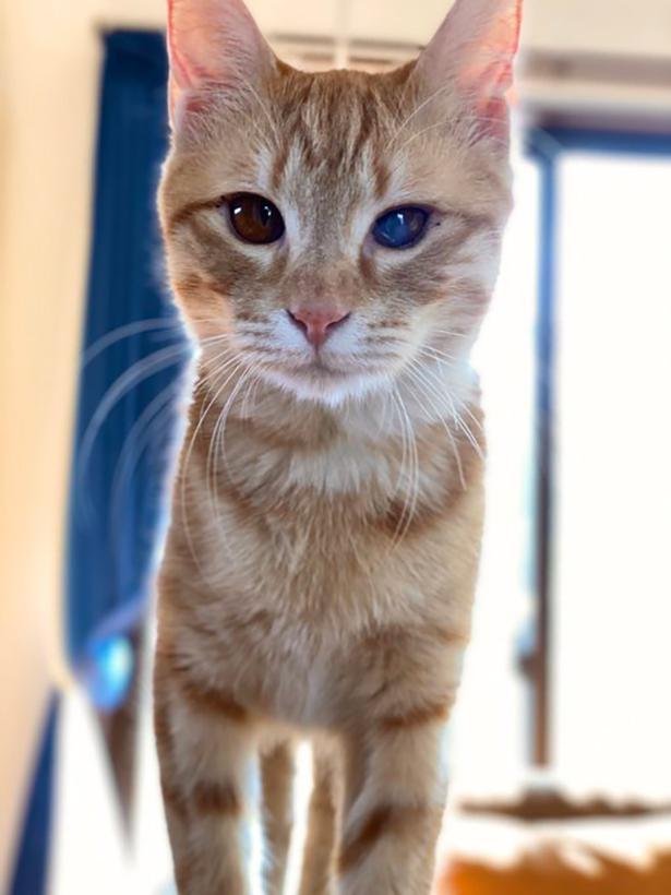 猫ヘルペスの後遺症が残っているという金柑ちゃん