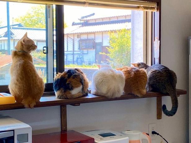 猫好きにはたまらない!至福の光景