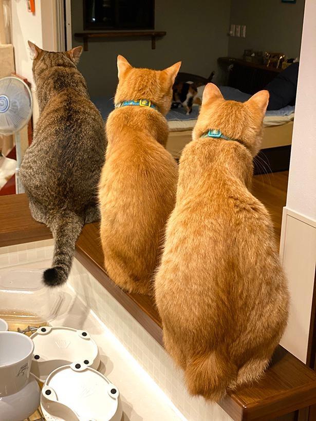 生まれも育ちも違うのに、だんだんと似てくる猫たち