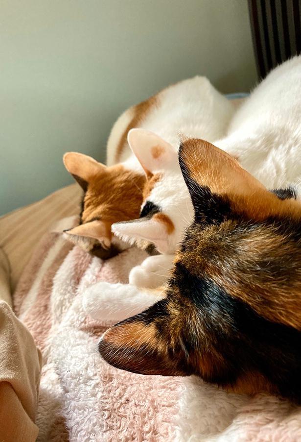 多頭飼いしか味わえない、寝起きの絶景がこちら