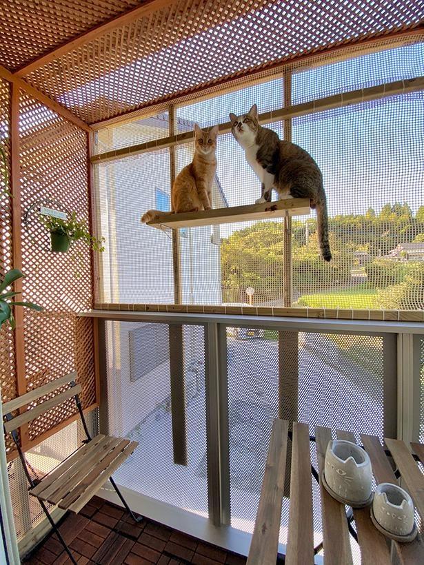 猫たちのためにベランダをDIY!