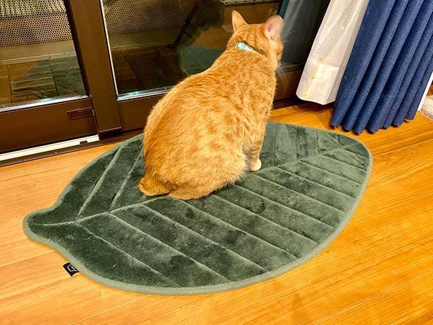 1匹の猫が…