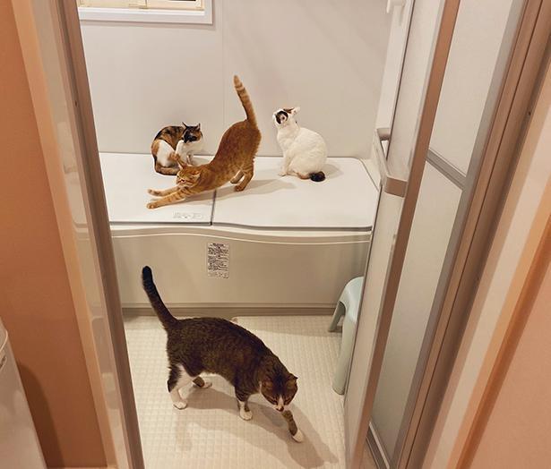 浴室暖房をつけると、一瞬で猫風呂に変身