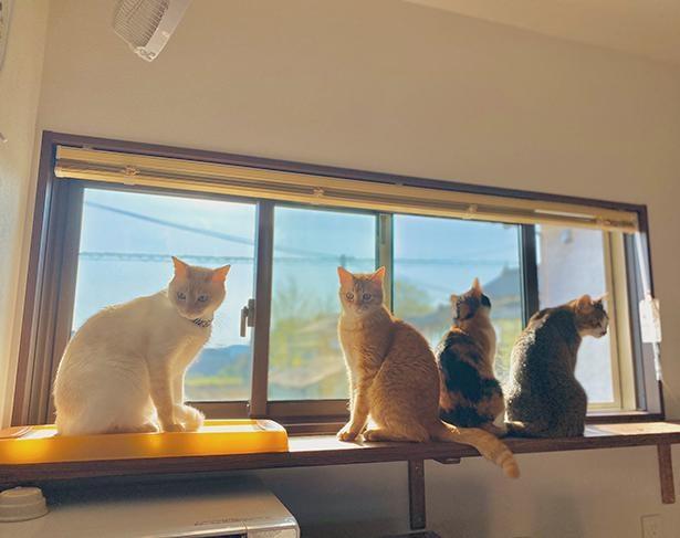 細長い窓は猫たちのお気に入り